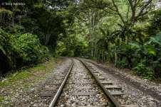 A trilha até Aguas Calientes vai margeando a linha do trem