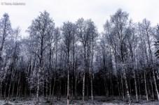 Laponia - Finlandia-8513