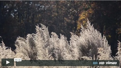 http://sites.nicholas.duke.edu/DukeSNAP/portfolio/horton-grove-video/