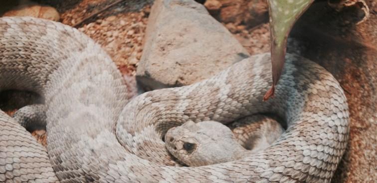 Serpente allo Zoo di San Diego