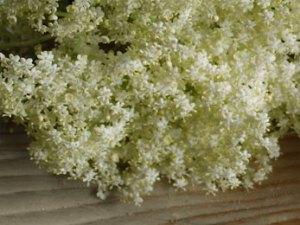 Ricetta con i fiori di sambuco