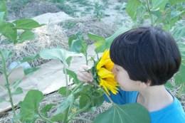 orto-biologico-terra-di-ciona-fiumicello (14)