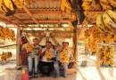 Festival multicultural em Silvianópolis e Festa do Peão em S.S. Bela Vista são opções para o FDS
