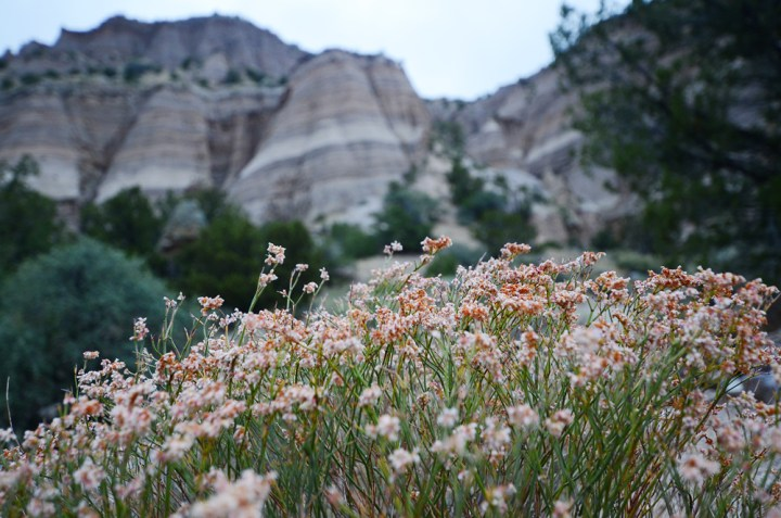 Why I Solo Adventured to New Mexico
