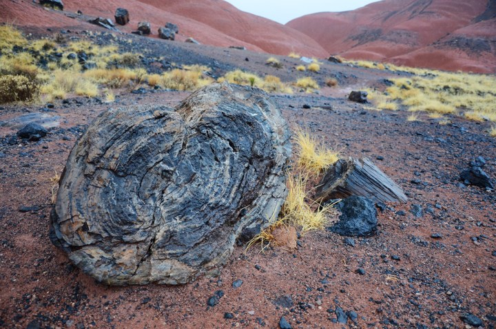 A Fated & Rainy Day at Petrified Forest National Park & a Lack of Words