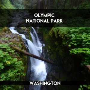 Olympic National Park || terragoes.com