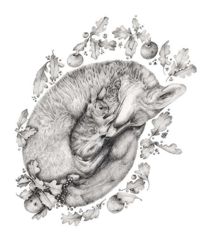 drawing of a sleeping fox curled up with a bunny rabbit by Kristin Maija Peterson