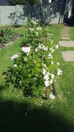 pollinators added