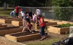 1_Community garden
