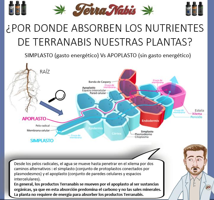 Dr nabis absorcion de nutrientes terranabis