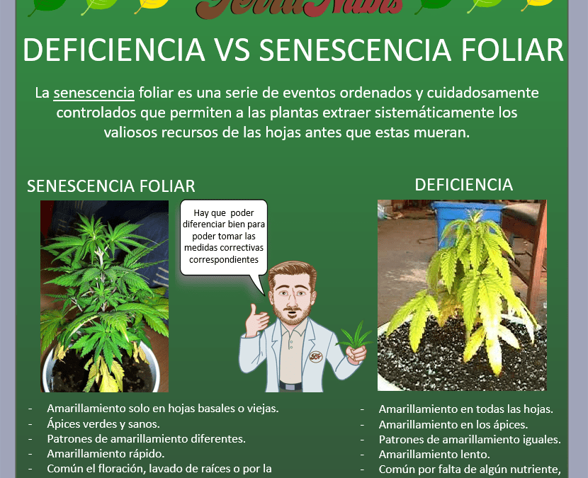 Dr nabis senescencia vs deficiencia