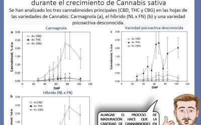 Dr Nabis Evolucion temporal cannabinoides