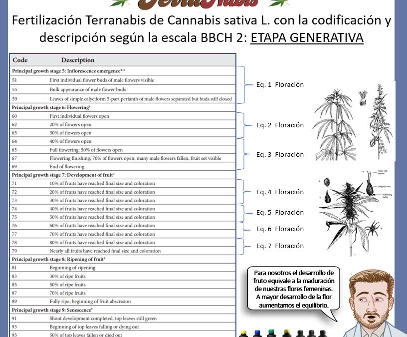 Dr Nabis bbch cannabis 2