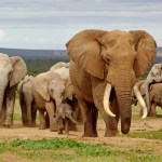 Super South Africa Safari Deal!