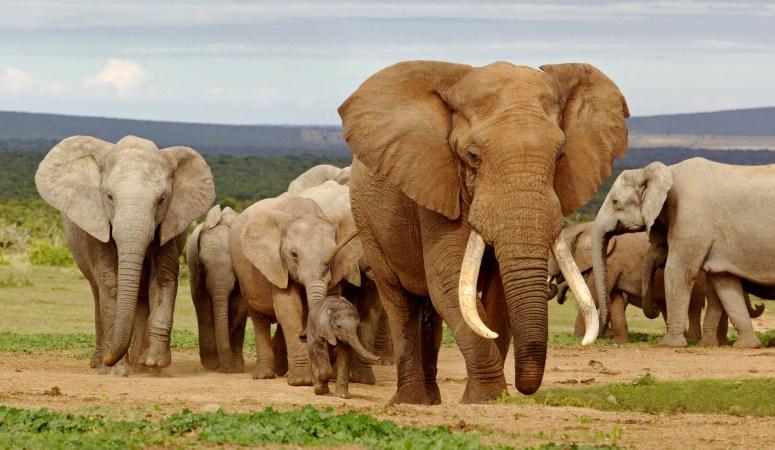 Super South Africa Safari Deal!