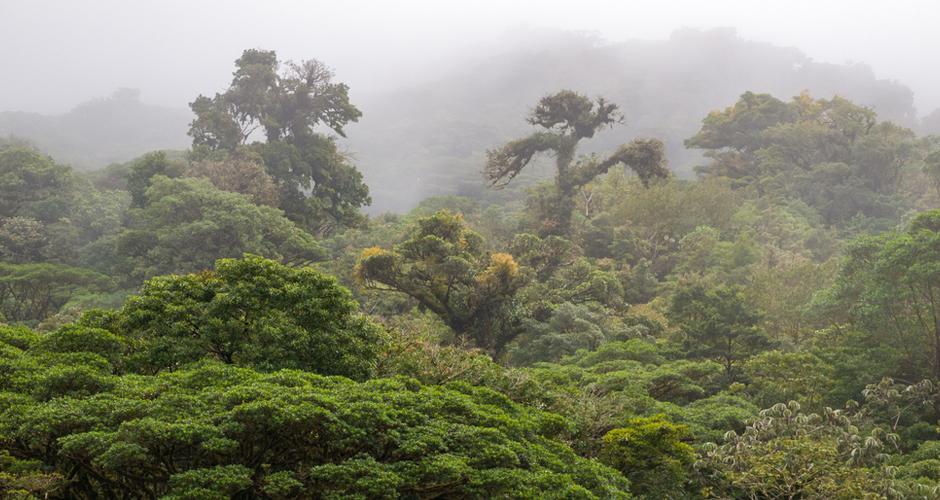 Monteverde Rainfores Costa Rica