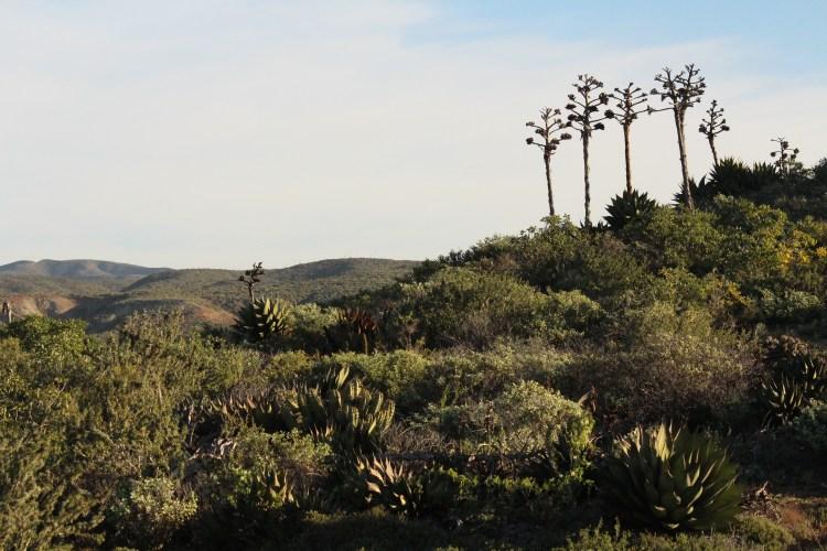 Reserva Natural Valle Tranquilo. Foto Bárbara Ramírez