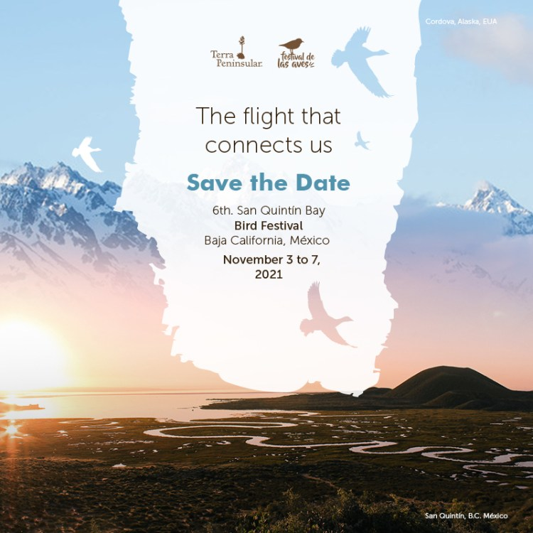 Save the Date San Quintin Bird Festival 2021