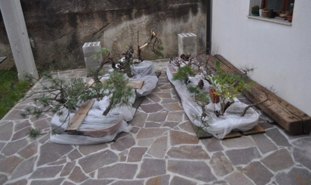 zimska zaščita s kopreno / winter protection with fleece / protezione invernale con il velo (Matjaz`s palce)