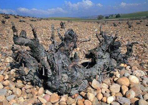 3629c0f9b603e25f1a1740b57a75aedb--sierra-wineries
