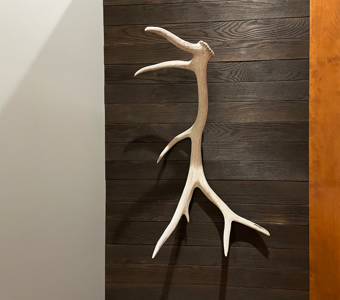 eld antler against burnt and burnished oak in modern loft style space raw elements