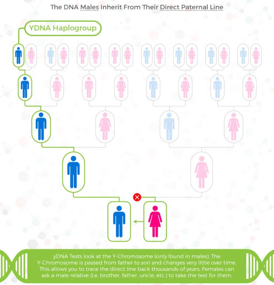Types of DNA testing used for geneaolgy: yDNA – Paternal Line