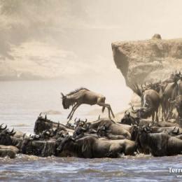 Presenciar la Gran Migració a Masai Mara