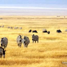 Serengeti, la terra infinita