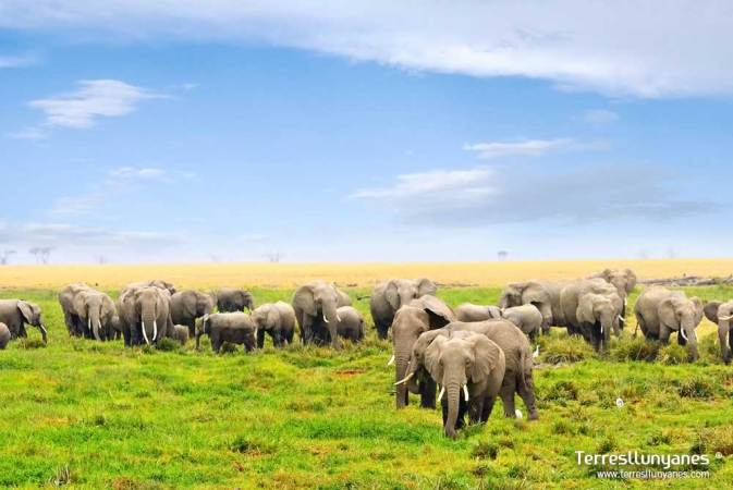 Manada de elefantes en ciénaga