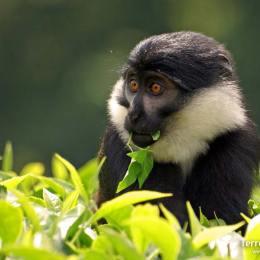Sortir a la recerca de petits primats a Kakamega Forest