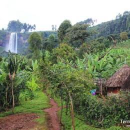 Muntanya Elgon i Sipi Falls
