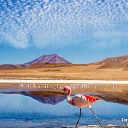 Reserva Nacional de Fauna Andina Eduardo Avaroa en puro altiplano