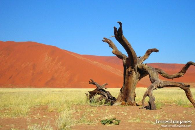 El desierto del Namib