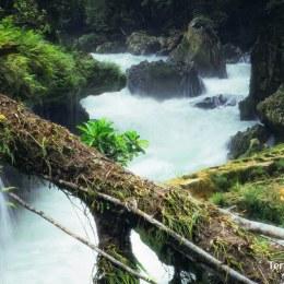 Selva de Petén