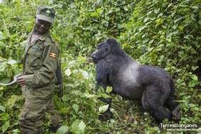 viajes-uganda-gorilas