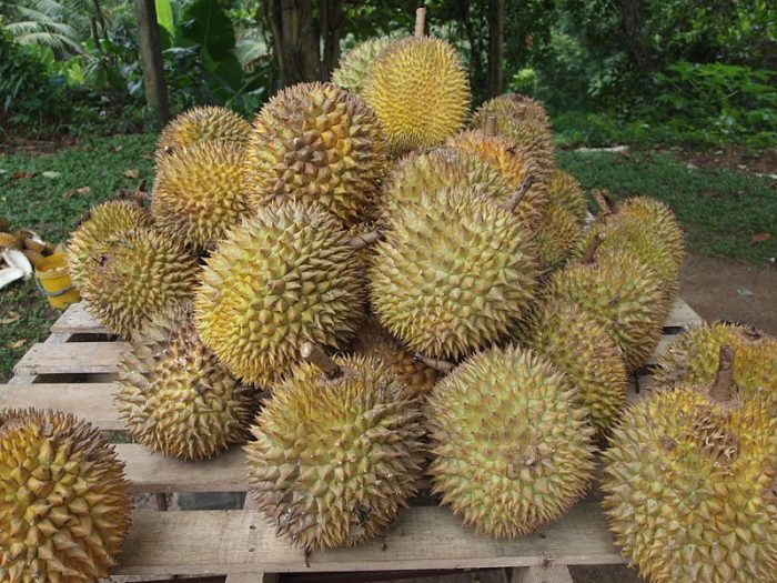 800px-Durian-1
