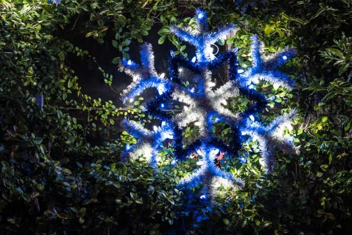 Zoo Lights_7505