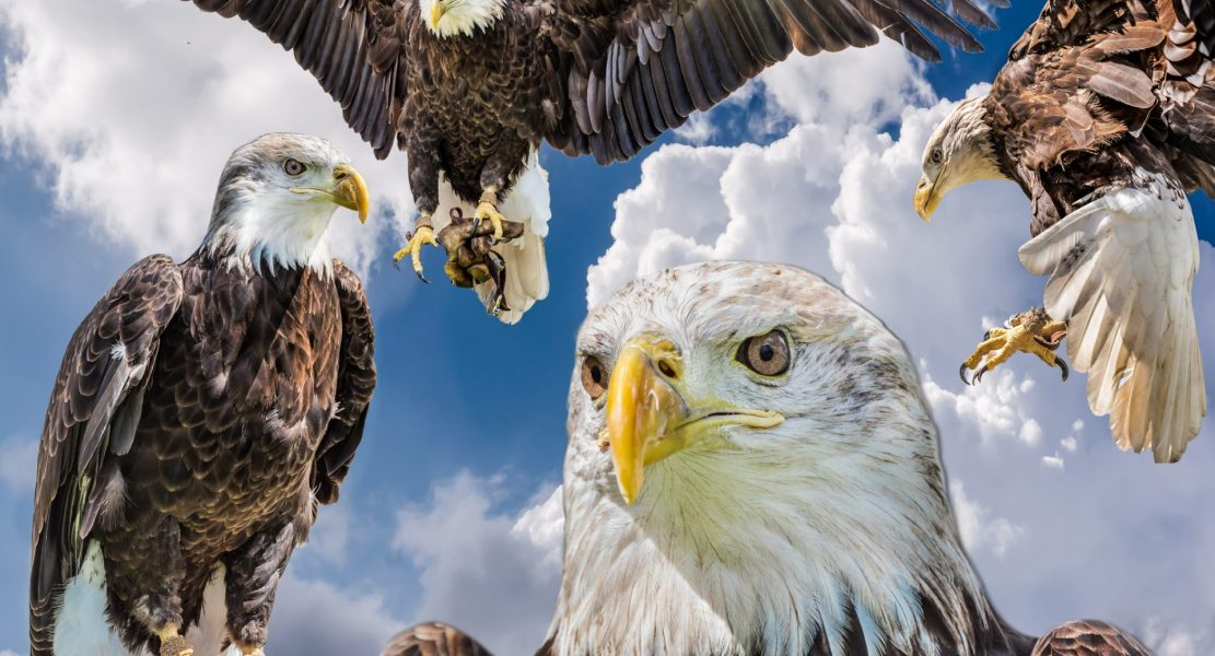 Wings Over Boerne
