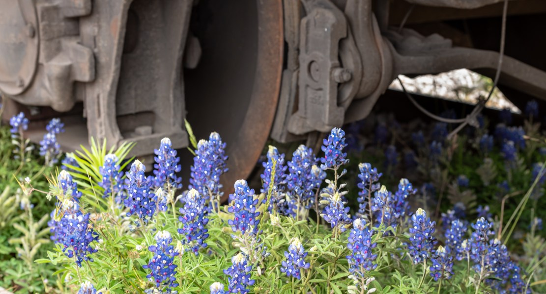 Bluebonnet Festival – Burnet Texas