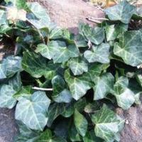 Top 10 Common Plants That Are Poisonous