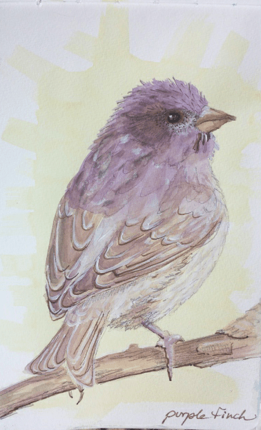 Yellow and purple finch