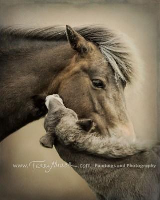 MareFoal_16TM0842