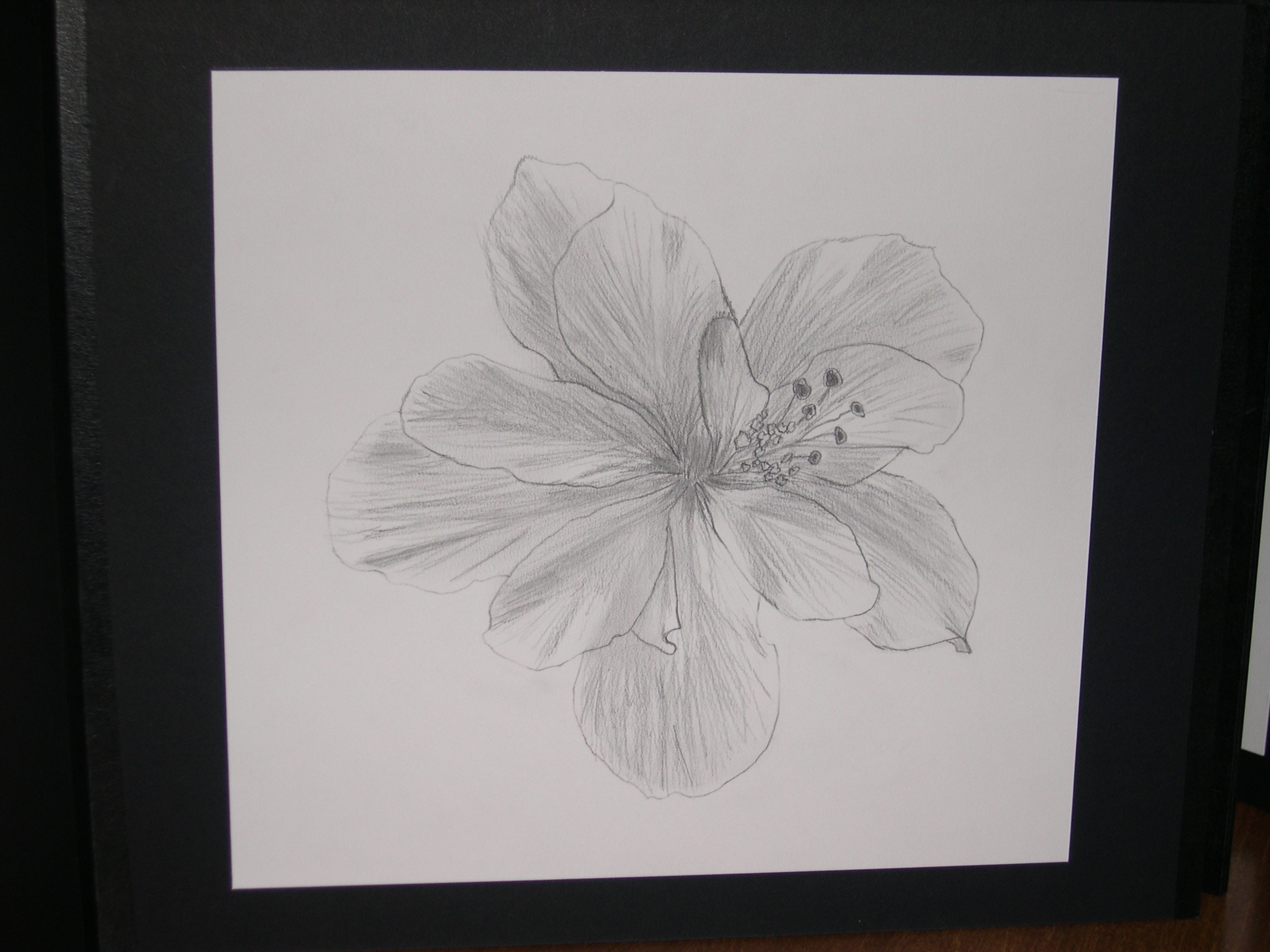 step 2 drawing