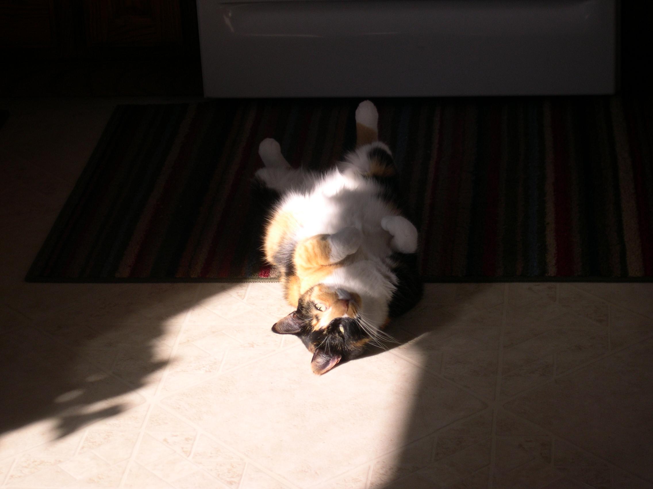 Callie sunning her belly