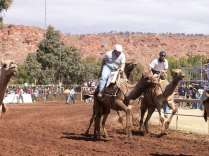 camel cup races