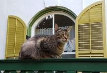 Hemmingway's 6 toed cats
