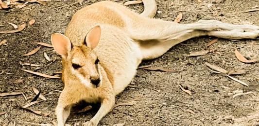 Australia - the land Down Under
