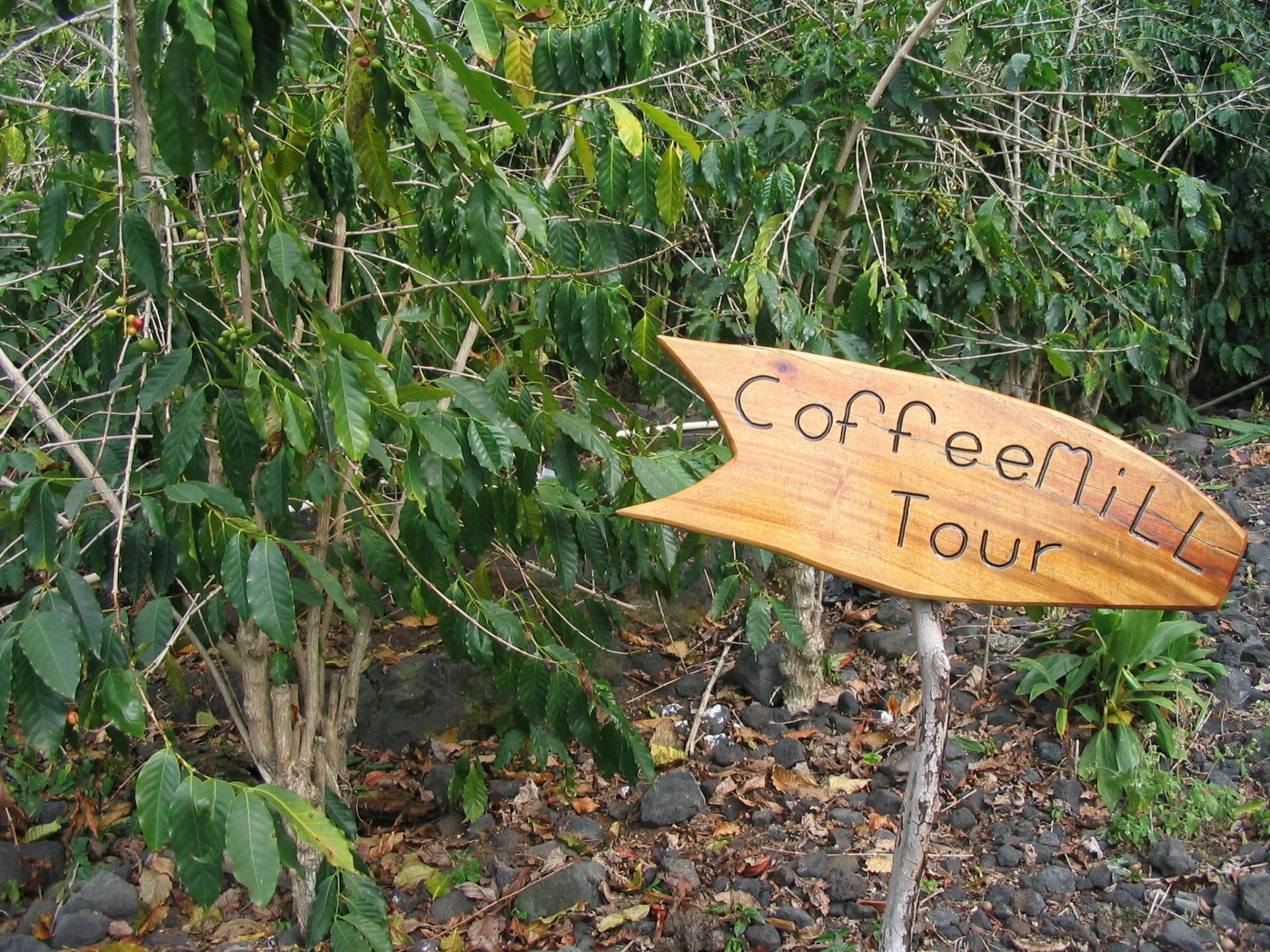 Ah, Big Island coffee! Yum...and a tour...