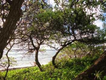 Lydgate Park Water views