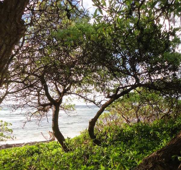 Friday Fotos — Lydgate Park water views are everywhere